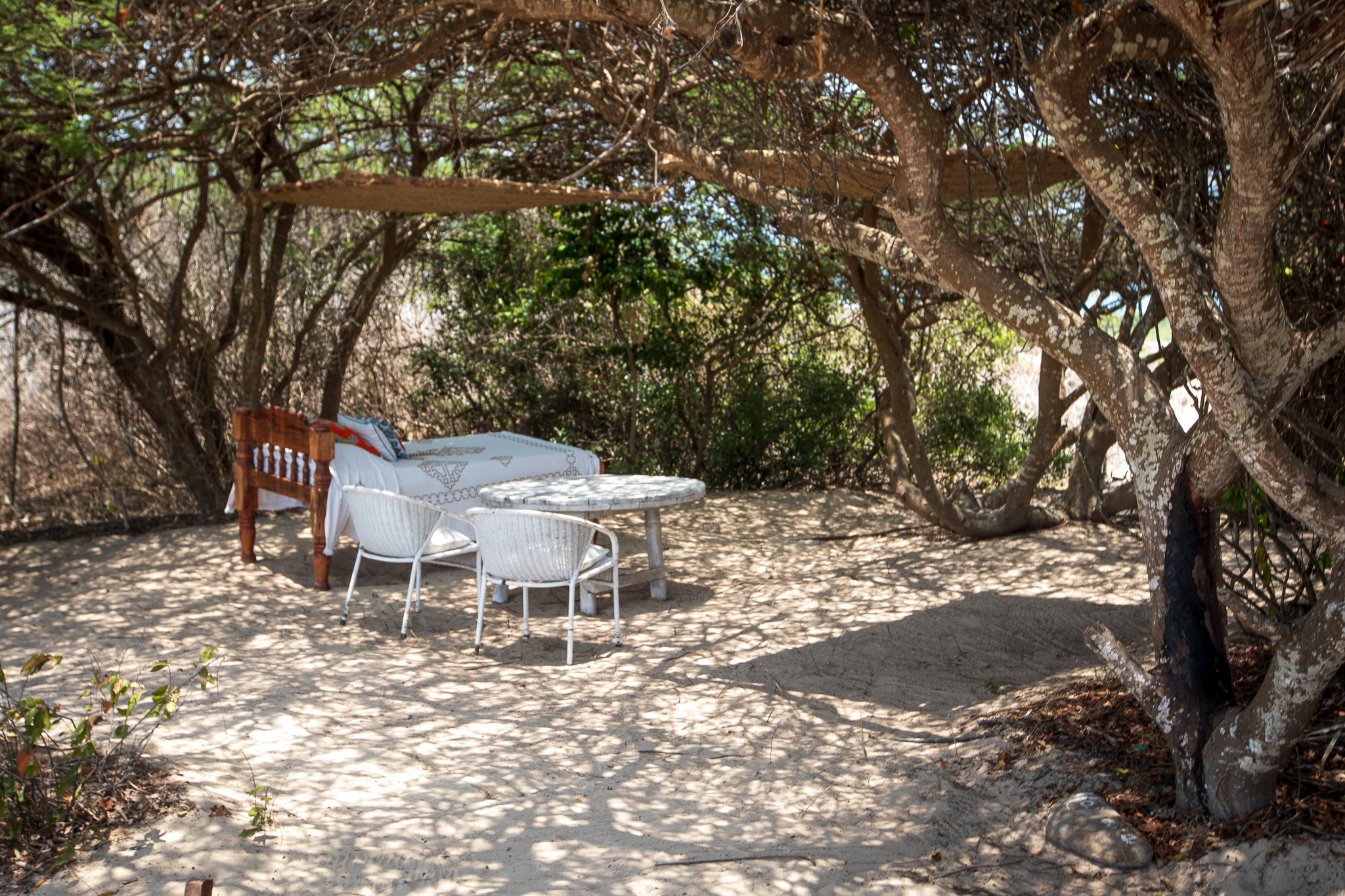 Sankuri under acacia