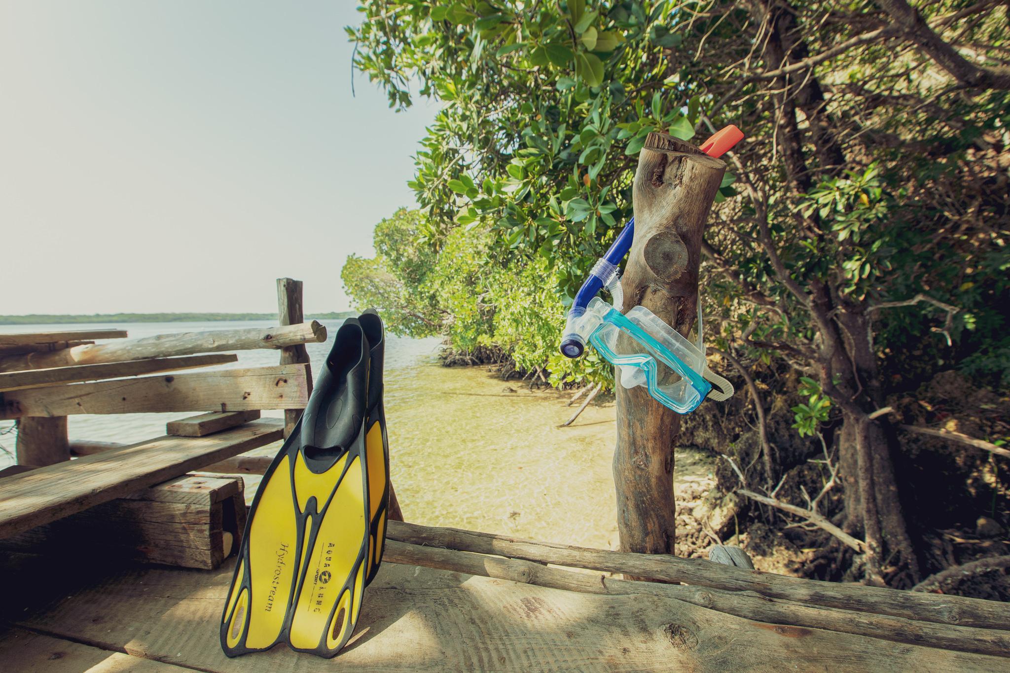 Snorkel & fins
